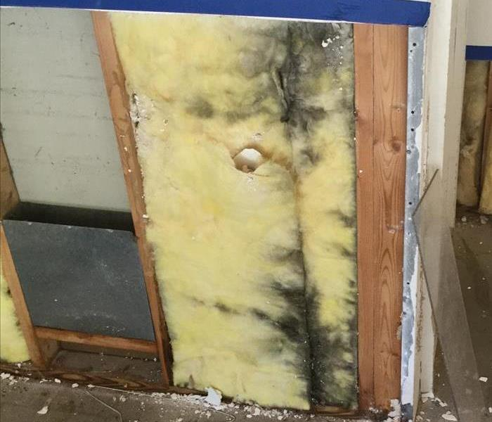 Mold Remediation in Austell, GA